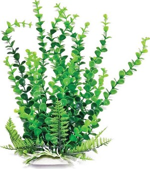 Great background plant mini aquarium